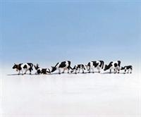 Noch 15721Noch Cows - Black & White x 7