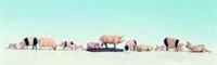 Noch 36712Noch Pigs x12