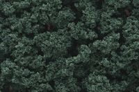 Woodland Scenics FC147 Bushes - Dark Green