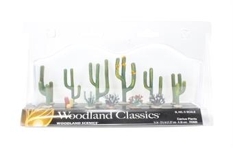 TR3600 ½-2 ½in. Cactus Plants 13/Pk